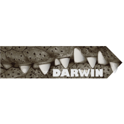 Travel Souvenir Darwin